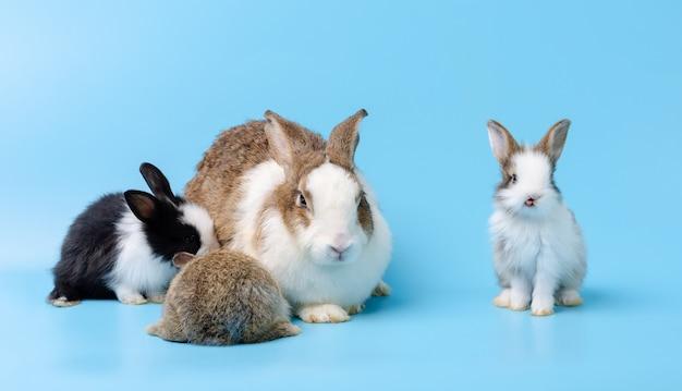 Adorable mère avec trois bébés lapins portraiton isolé sur bleu