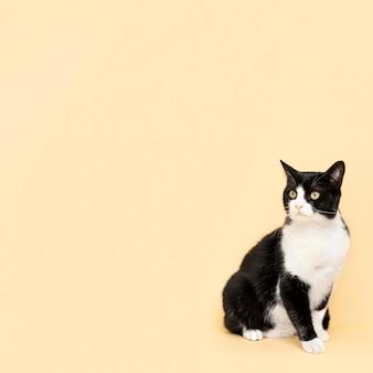 Adorable minou noir et blanc avec mur monochrome derrière elle