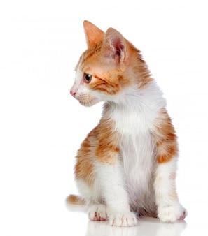 Adorable petit chat isolé sur fond blanc.