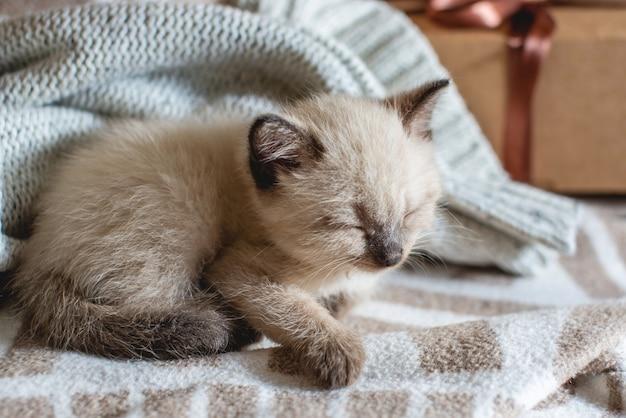 Adorable petit chaton moelleux adorable dort confortablement sur une couverture douce à côté d'une boîte-cadeau attachée avec un ruban