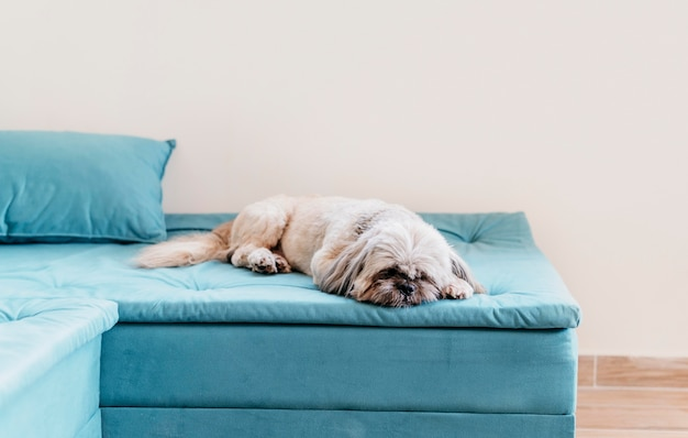 Adorable petit chien relaxant