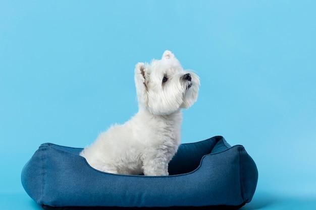 Adorable petit chiot blanc isolé sur bleu