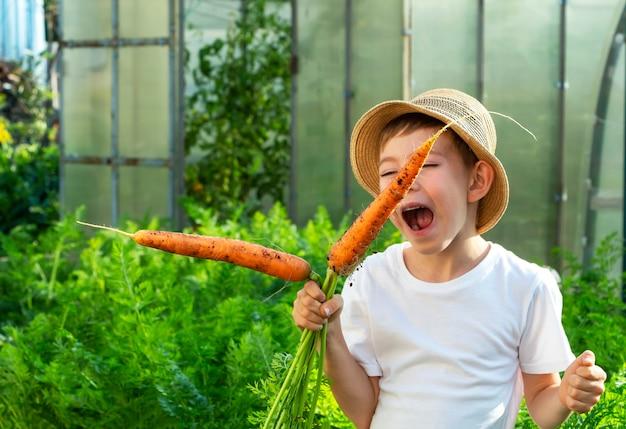Adorable petit enfant garçon au chapeau de paille avec des carottes dans le jardin intérieur. jardinage et récolte des enfants. consept de légumes biologiques sains pour les enfants. végétarisme des enfants