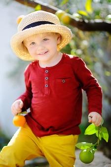 Adorable petit garçon au chapeau de paille cueillette mandarine mûre fraîche dans le jardin ensoleillé de la mandarine en italie.