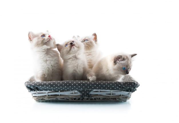 Adorables chats sur fond blanc isolé