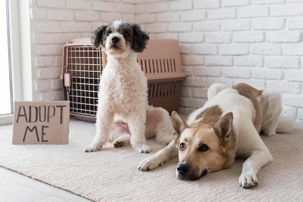 Adorables chiens près de la bannière adoptez-moi