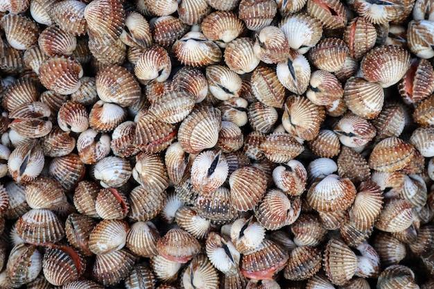 Affichage de palourdes fraîches crus de coques de mer à vendre au marché de fruits de mer