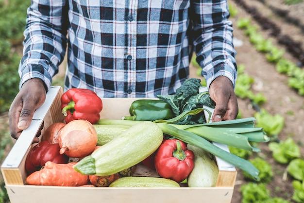African farmer man holding boîte en bois avec des légumes biologiques frais - alimentation saine et concept de récolte - accent principal sur la main droite