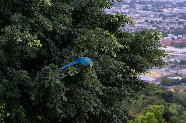 Afrique ara sur l'arbre