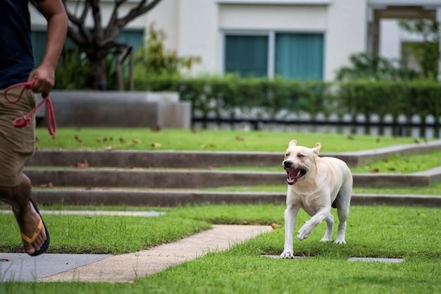 Agressif rabies labrador chien morsure homme