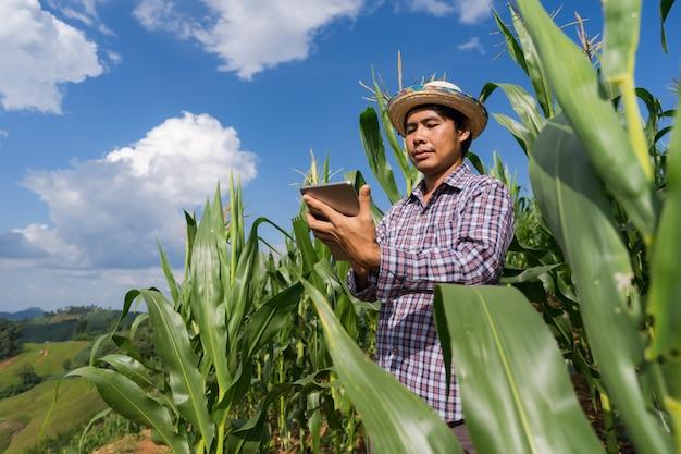 Agriculteur adulte tenant la tablette dans le champ de maïs sous le ciel bleu en été