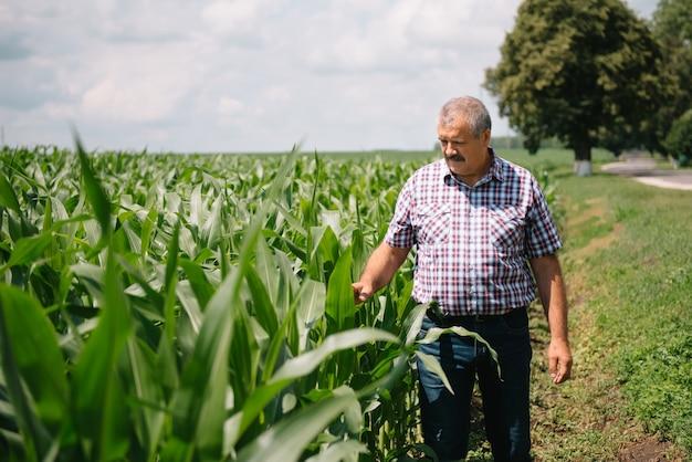 Agriculteur adulte vérifiant les plantes de sa ferme. l'agronome tient la tablette dans le champ de maïs et examine les cultures. concept agroalimentaire. ingénieur agricole debout dans un champ de maïs avec une tablette.