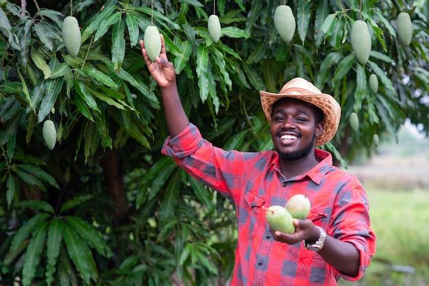 Un agriculteur africain montre des fruits de mangue dans une ferme biologique. concept d'agriculture ou de culture