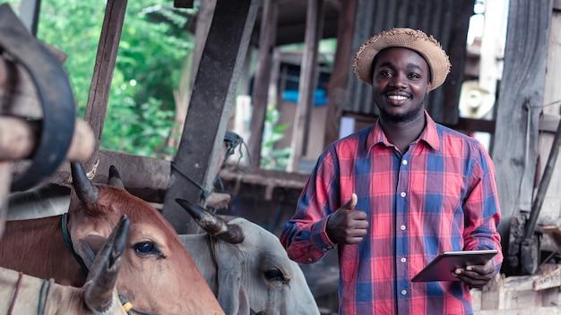 Agriculteur africain recherchant et enregistrant des détails sur la tablette de chaque industrie bovine dans une ferme. concept d'agriculture ou de culture