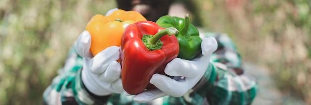 Agriculteur africain tenant des produits de poivrons de la ferme biologique. concept d'agriculture ou de culture