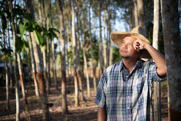Agriculteur agriculteur plantation d'hévéa faible rendement