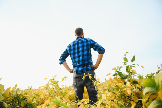 Un agriculteur ou un agronome examine une plante de soja dans un champ.