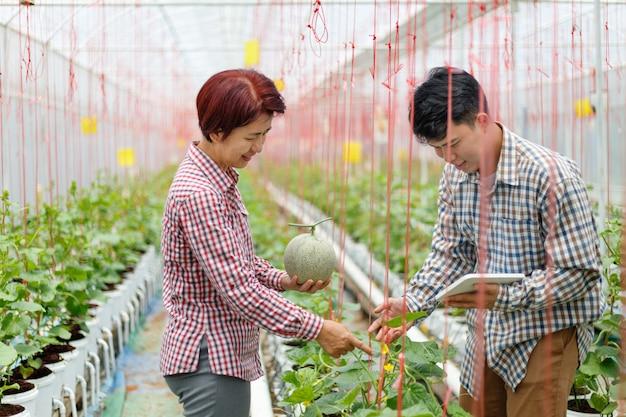 Agriculteur à l'aide d'un système agricole de contrôle par ordinateur tablette en serre avant la récolte