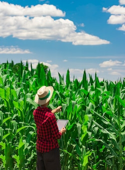 Agriculteur à l'aide d'une tablette numérique dans la plantation de champs de maïs cultivé