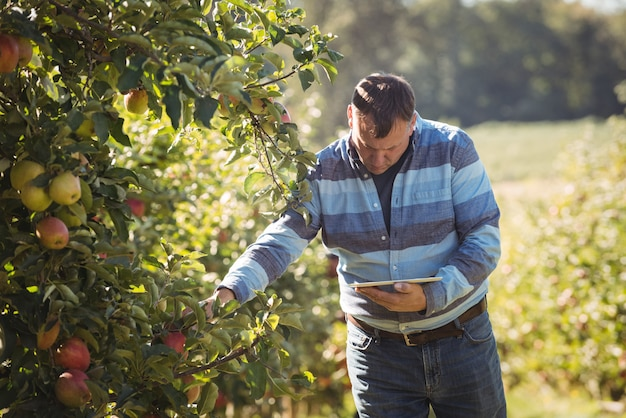 Agriculteur à l'aide de tablette numérique tout en inspectant un pommier dans un verger de pommiers