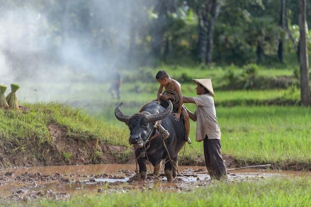 Agriculteur asiatique et enfant dans une rizière avec buffle
