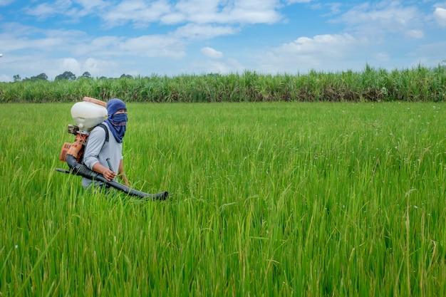 Agriculteur asiatique thaïlandais d'herbicides ou d'engrais chimiques équipement sur les champs de riz vert.