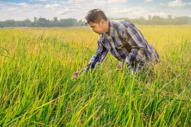 Agriculteur asiatique travaille sur la rizière avec beau ciel
