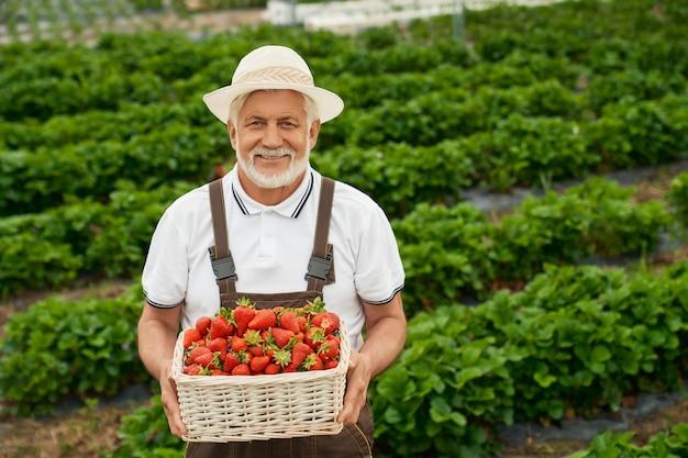 Agriculteur caucasien souriant en chapeau blanc et salopette marron tenant un panier avec des fraises mûres. homme senior debout sur une serre extérieure avec récolte saisonnière dans les mains.