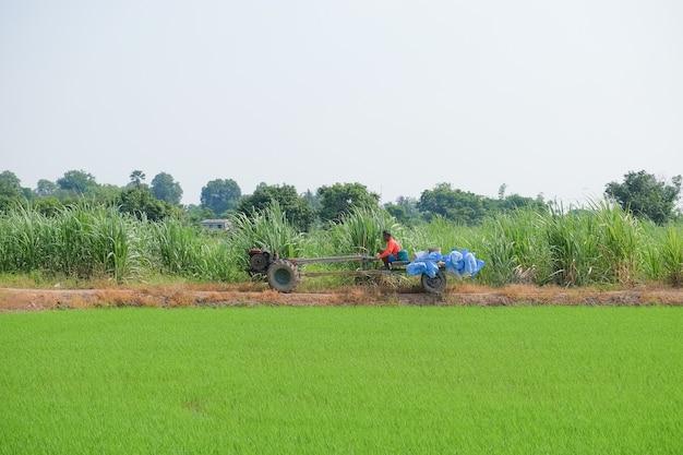 Un agriculteur conduit un camion d'engrais chimique dans le champ.