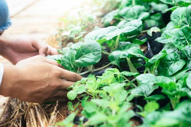 Agriculteur cueillant des légumes biologiques frais dans le jardin.