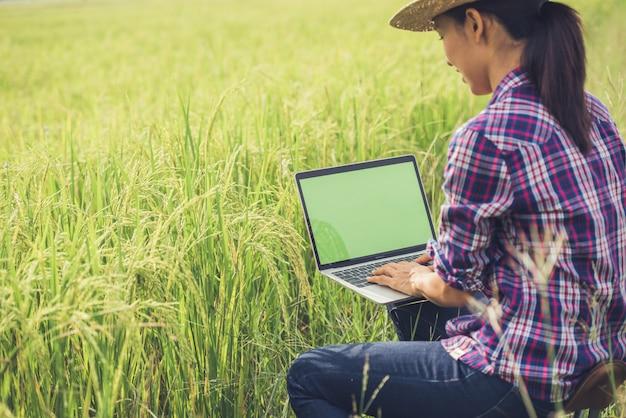 Agriculteur dans un champ de riz avec un ordinateur portable