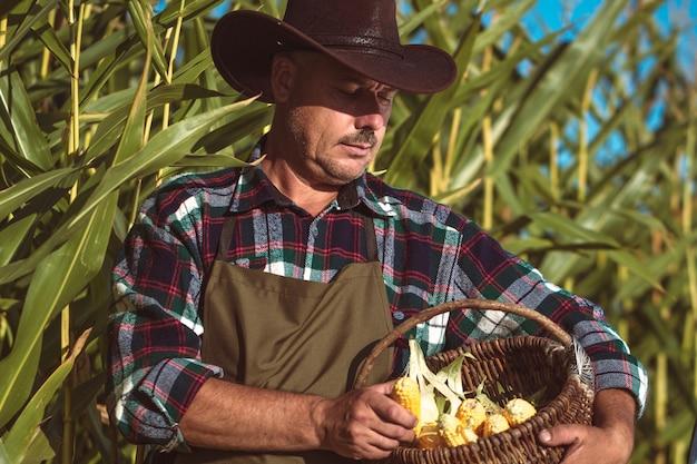 Un agriculteur dans un chapeau et un tablier dans un champ de maïs récolte un maïs juteux, jaune et mûr au coucher du soleil