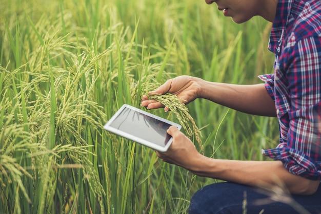 Agriculteur debout dans une rizière avec une tablette.