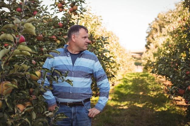 Agriculteur debout dans un verger de pommiers