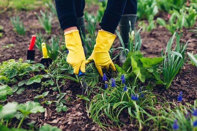 Agriculteur desserrant le sol avec une fourchette à main parmi les fleurs de printemps dans le jardin
