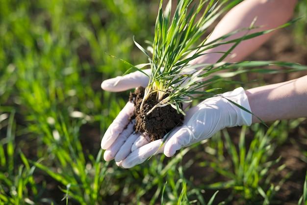 Agriculteur détenant des cultures sur le terrain