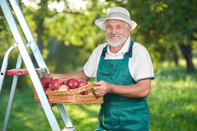 Agriculteur heureux cueillette des pommes au jardin debout sur une échelle.