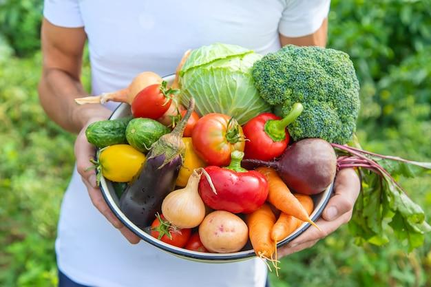 Agriculteur homme avec des légumes faits maison dans ses mains. mise au point sélective.