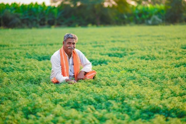Agriculteur indien dans le champ de pois chiches