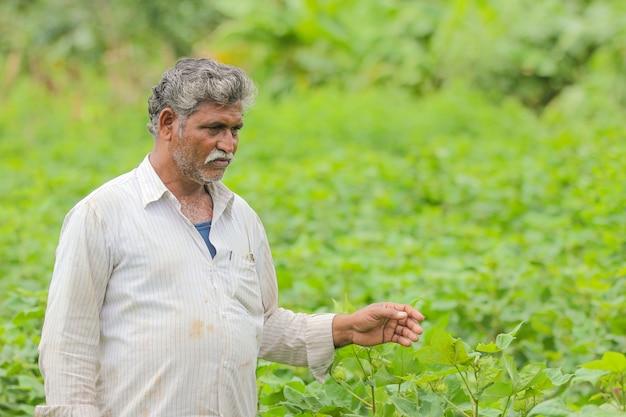 Agriculteur indien dans une ferme de coton