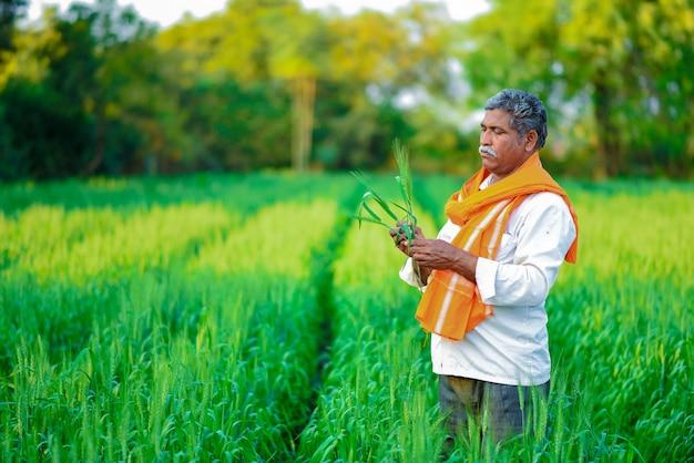 Agriculteur indien détenant une plante de culture dans son champ de blé