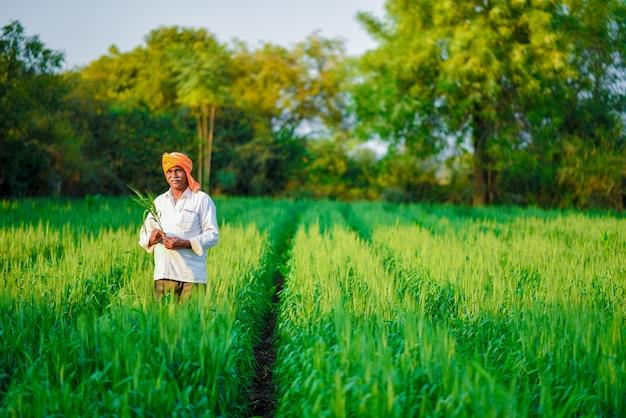Agriculteur indien tenant une plante dans son champ de blé