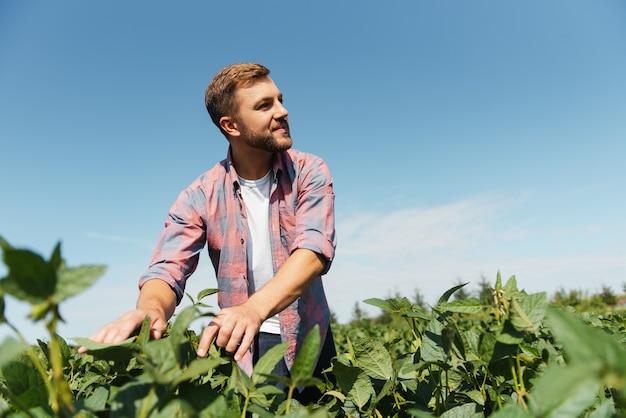 Un agriculteur inspecte un champ de soja vert. le concept de la récolte