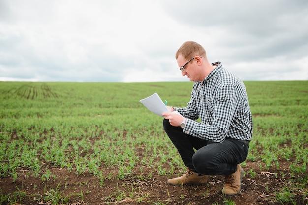 L'agriculteur inspecte la croissance des pois chiches en marchant dans le champ. champ de pois chiches verts frais