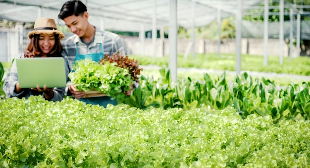 L'agriculteur inspecte la qualité de la laitue de la ferme hydroponique et enregistre dans l'ordinateur portable