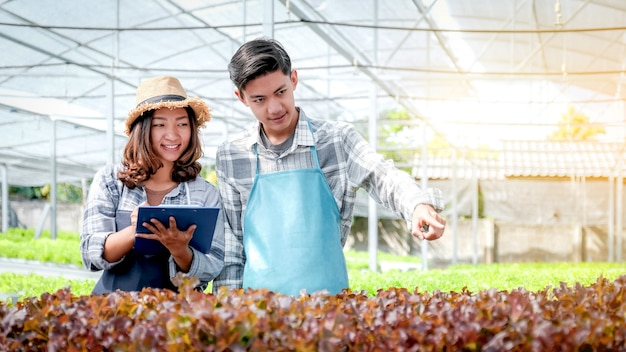 Agriculteur inspecter la qualité de la salade biologique de légumes et de la laitue de la ferme hydroponique et prendre des notes sur le presse-papiers t