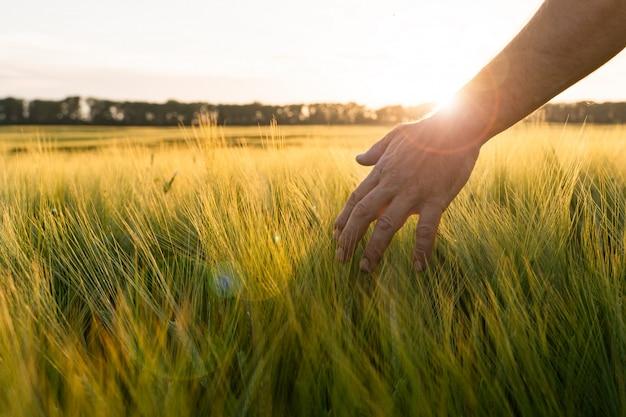 Agriculteur marchant dans un champ