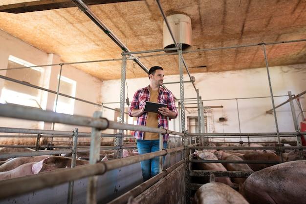 Agriculteur marchant dans une grande porcherie contrôlant la croissance des porcs via un ordinateur tablette