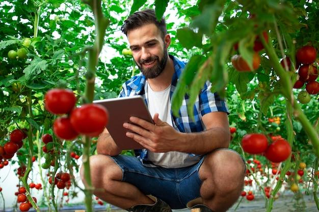 Agriculteur avec ordinateur tablette vérifiant la qualité et la fraîcheur des légumes tomates dans la ferme d'aliments biologiques