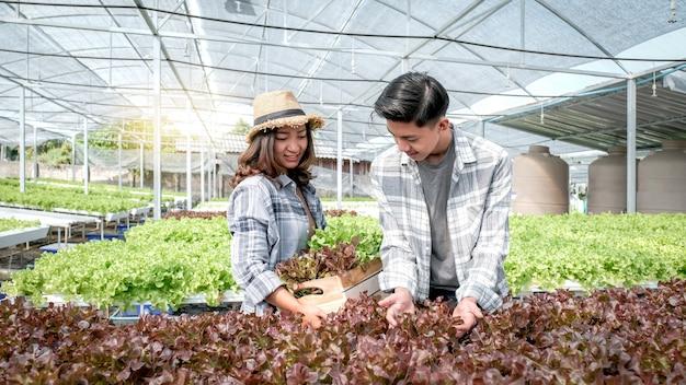 Agriculteur récolte de la laitue salade biologique de légumes de la ferme hydroponique